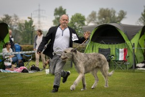 Hunde neu-12
