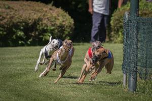 Hunderennen 500-10