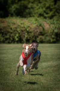 Hunderennen 500-17