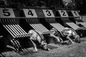 Hunderennen 500-24