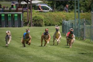 Hunderennen 500-46