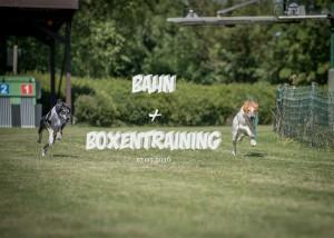 Bahn & Boxentraining 17.07.2016
