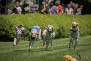 Hunderennen 500-40