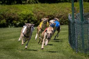 Hunderennen 500-44