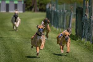 Hunderennen 500-48